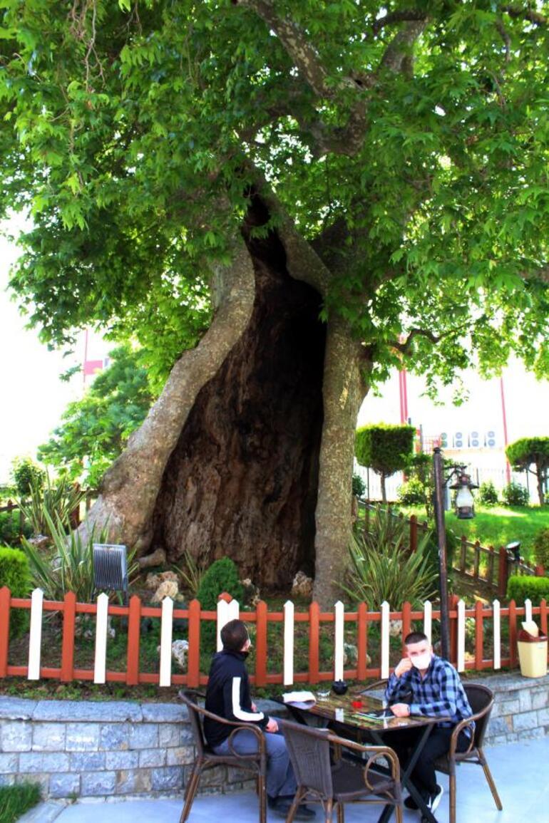2020/06/1591184160_ağaç1.jpeg