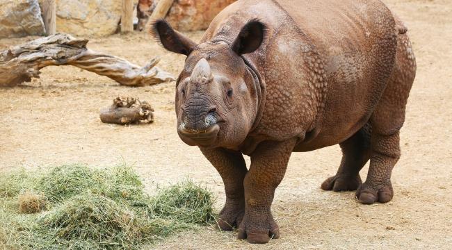 Darıca Faruk Yalçın Hayvanat Bahçesi ve Botanik Parkıyeniden kapılarını açıyor!